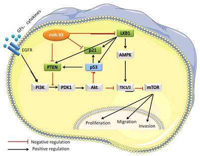 MiR-93 Promotes the Growth and Invasion of Prostate Cancer by Upregulating its Target Genes TGFBR2, ITGB8, and LATS2