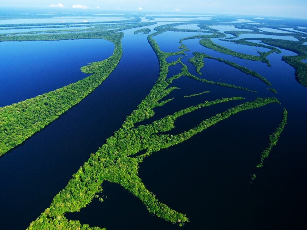 $100 million Biodiversity Investment in the Amazon region